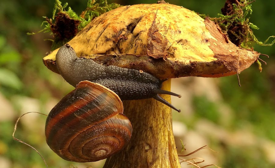 by Eva  Doe - Nature Up Close Mushrooms & Fungi