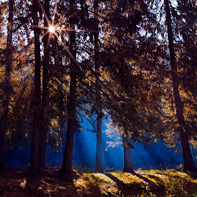 Lightshy by Andra Soceanu - Landscapes Forests (  )
