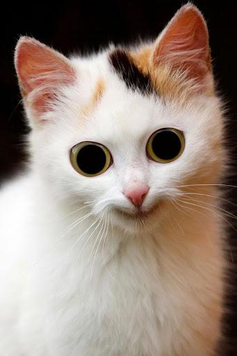 Cutie Kitten Cat