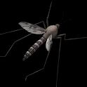 Mosquito Sound