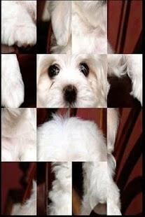 可愛的小狗益智遊戲