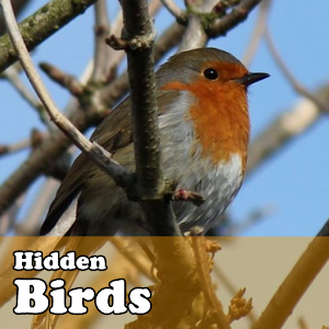 Hidden Object Games – Birds for PC and MAC