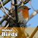 Hidden Object Games - Birds