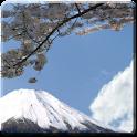 Sakura Blossom Live Wallpaper logo