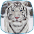 White Tiger Live Wallpaper file APK for Gaming PC/PS3/PS4 Smart TV