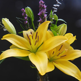 Yellow Lilies with Purple Accents by Kathy Rose Willis - Flowers Flower Arangements ( arrange, yellow flowers, bouquet, purple, green, yellow, black,  )