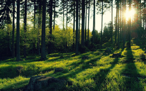 Forest Jigsaw Puzzles for PC
