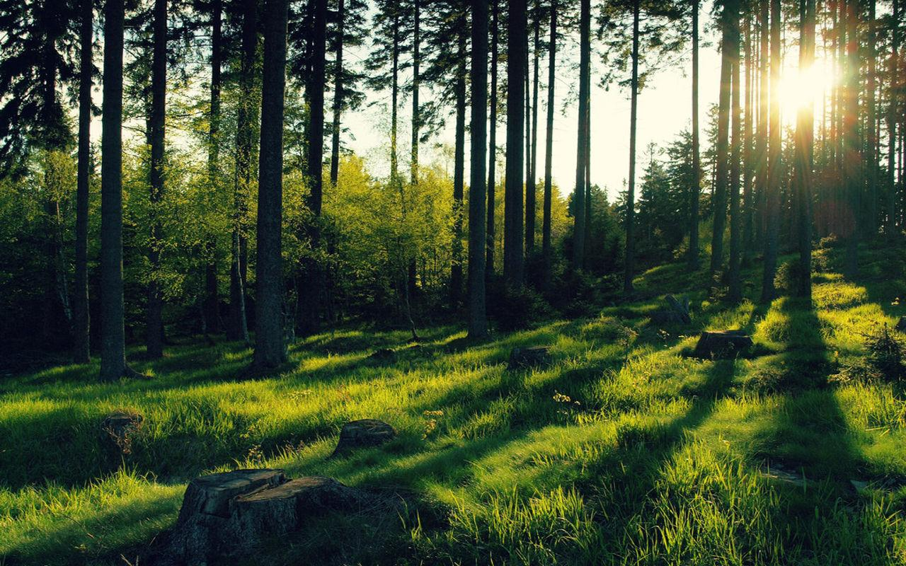forest jigsaw puzzles android apps on google play