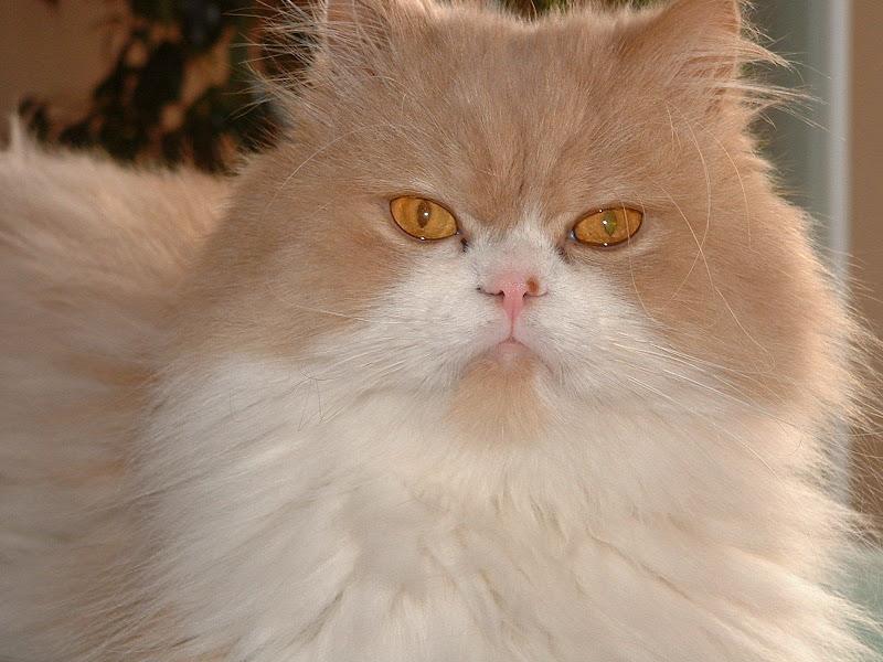 Fotos Gratis Animales - Gatos