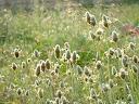 Fotos Gratis Naturaleza - Flores - Flores de la hierva