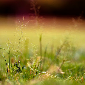 by Anshul Sukhwal - Nature Up Close Leaves & Grasses