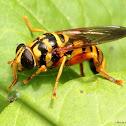 Yellowjacket hoverfly