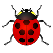 The ladybug game for kids
