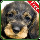 Dachshund+ Free icon