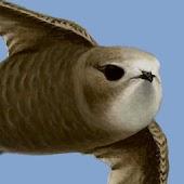 bird alert PRO