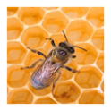 HiveManager icon