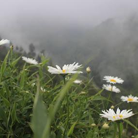 wild flowers by Styoningrum Styoningrum - Flowers Flowers in the Wild ( wild, mountain, beauty, flower )