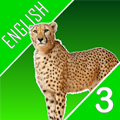 English Quiz Quest Third Grade