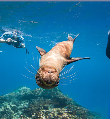 Have an amazing snorkeling adventure with playful sea critters.