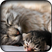 Sleeping Kitties Wallpapers