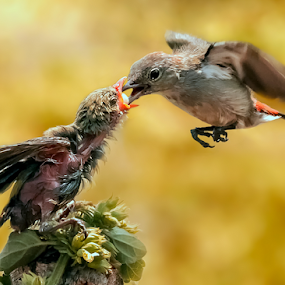 Fly & Feed by Husada Loy - Animals Birds
