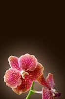 Screenshot of Tropical Orchids Wallpaper