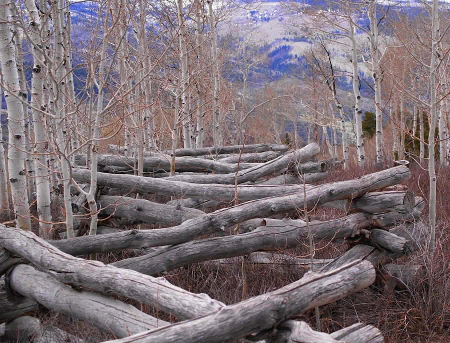 Log Fence by Shelly McAllister - Landscapes Prairies, Meadows & Fields
