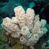 Type of sponge