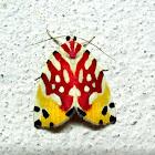 Nolidae Chloephorinae