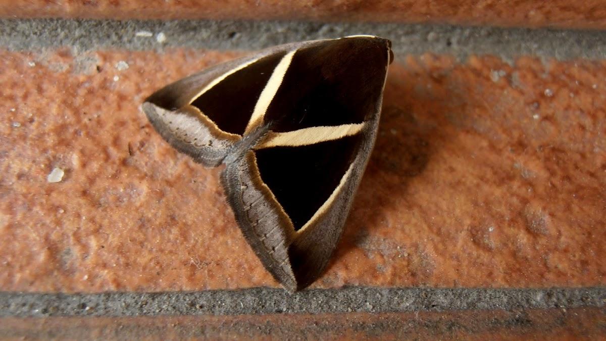 Chalciope mygdon Moth