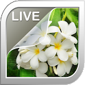 Jasmine Live Wallpaper icon
