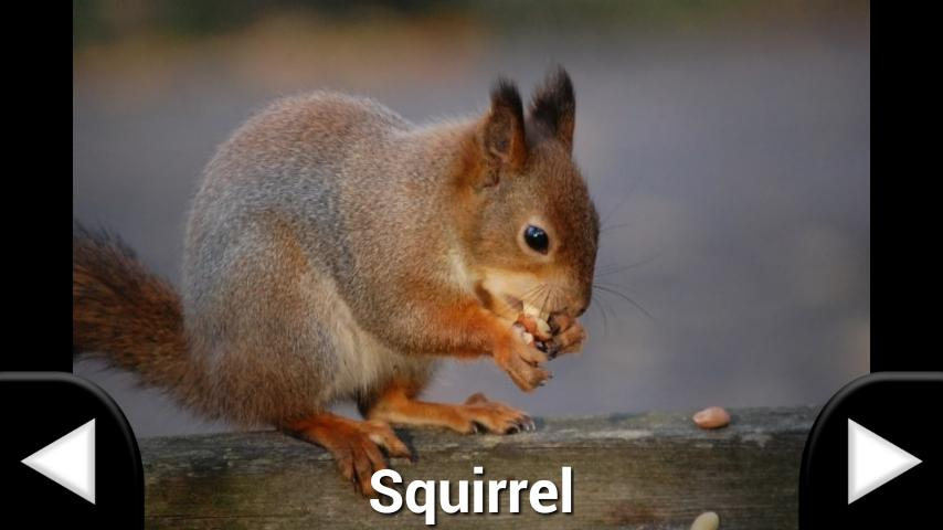 Animal Sounds Flash Cards- screenshot