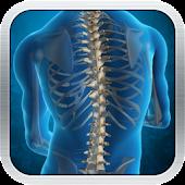 Spine Glossary