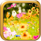 6D Flower-GO Launcher