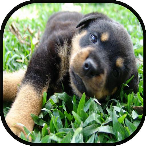 娛樂必備App|Cachorros Rottweiler LOGO-綠色工廠好玩App