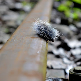by Pritam Sen - Nature Up Close Other Natural Objects