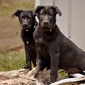 Mikey & Hattie- Mbass2014 by Mickey Bass - Animals - Dogs Portraits ( #showusyourpets, #garyfongpets )