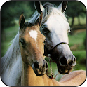 Cute horse wallpapers icon
