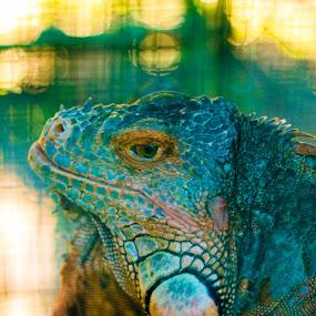 Blend In by Krizzel Almazora - Animals Reptiles