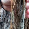 Hairy catapillar