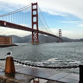 by Dorothy Valine Gram - Buildings & Architecture Bridges & Suspended Structures ( golden gate bridge,  )