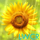 sunflower lwp icon