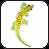 Gecko doo-dad org/yell/green