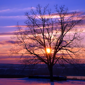 Lone TRee by Teza Del - Nature Up Close Trees & Bushes ( sunset )