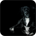 Cães 3d Wallpapers icon