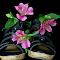 aIMG_1556_cr.jpg