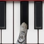 פסנתר חתולים