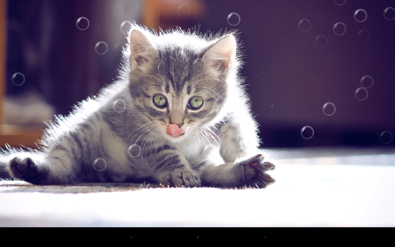 funny cat live wallpaper - android apps on google play