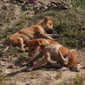 by Kingshuk Ghosh - Animals - Dogs Puppies