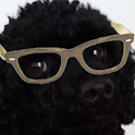 Crazy Hipster Dog icon